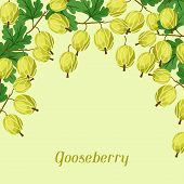 Nature background design with gooseberries.