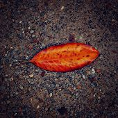 Lonesome Leaf On The Sand - Vintage Effect.