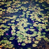 Lily Pads On The Surface Of A Pond - Retro Filter.