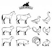 foto of working animal  - Farm animals collection - JPG
