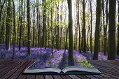 Creative Concept Image Stunning Bluebell Flowers In Spring Forest Landscape