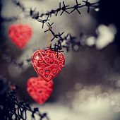 Hearts And Barbed Wire