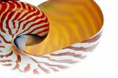nautilus shell section isolated on white background