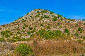 Dalmatian hinterland