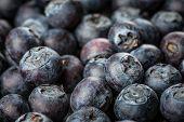 Fresh Berries - Blueberries background closeup