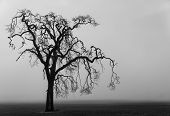 Fog shrouded tree