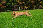 stock photo of tall grass  - Puppy running through tall grass in a field - JPG