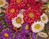 aster flowers bouquet closeup