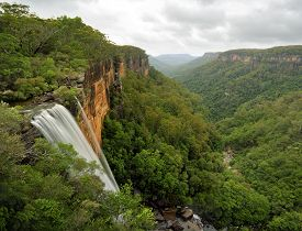 stock photo of rainforest  - Fitzroy Falls drops 81 metres into the Yarrunga Valley below filled with eucalypt trees and rainforest plants - JPG