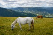 picture of yin  - Yin yang black and white horses feeding on the mountain pasture with mountains in background - JPG