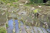 foto of ifugao  - Water on the rice terrases in Batad near Banaue - JPG