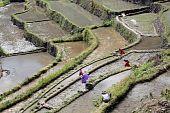 stock photo of ifugao  - Water and rice terrases in Batad near Banaue - JPG