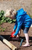 image of strawberry blonde  - Blonde haired boy watering seeds he has just planted from a toy teapot - JPG