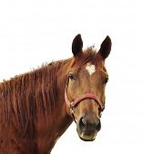 pic of horse head  - Digital Painting Of Brown Horse Head - JPG