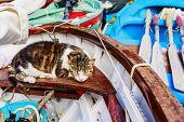 image of marina  - Cat sleeping in the boat at the marina - JPG
