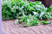 stock photo of basil leaves  - Close up Sweet basil leaf from Thailand - JPG