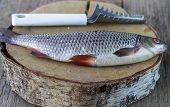 foto of caught  - Freshly caught fish on a wooden table and a knife for cleaning of scales - JPG