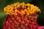 picture of stamen  - stamens and pistils close up - JPG