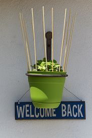 stock photo of catnip  - A green flower pot with your catnip plants hangs on a wall in front of a blue and white  - JPG