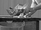 Man Filleting Fish Bw