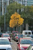 Solitary Yellow Tree