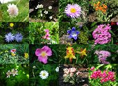 Collection of images of flowers