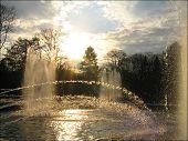 Sunny Splashes