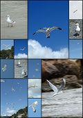 Seagull cover