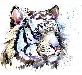 Постер, плакат: White tiger T shirt graphics tiger eyes illustration with splash watercolor textured background il