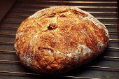 Fresh Crunchy Bread