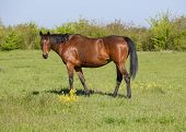 Horses Graze In The Pasture. Paddock Horses On A Horse Farm. Wal poster