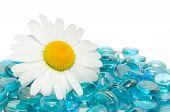 Margarida em pedras de vidro azul