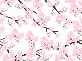 image of cherry blossom  - abstract floral background - JPG