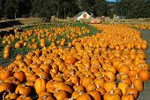 Pumpkin River