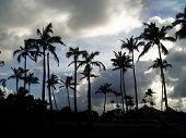 Coconut Palms At Dusk
