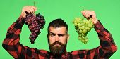 Man With Beard Holds Bunches Of Grapes On Green Background. poster