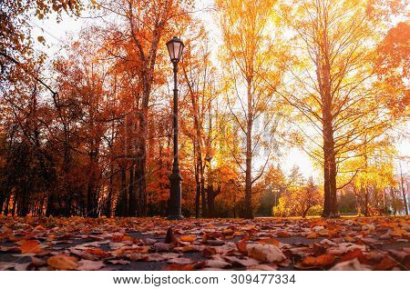 poster of Autumn city landscape. Autumn trees in sunny fall park lit by sunshine and fallen maple leaves on the foreground. Autumn city park scene
