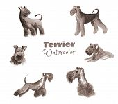 Hand-drawn Watercolor Terrier. Monochrome Color Set Of Pedigree Dog Isolated On White. poster