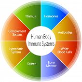 An image of a human body immune systems chart.