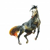 Watercolor Appaloosa Horse. Hand Drawn Beautiful Arabian, Mustang, Thoroughbred Stallion On White Ba poster