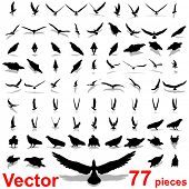 Vector set group or collection of black eagle silhouette isolated on white background for birds,animal,wildlife,symbol,,hawk,fly,flight,emblem,wild,decoration,wings,power,conceptual,falcon or insignia
