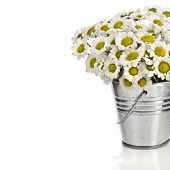 bouquet of daisy flowers in a bucket , border card oin white background