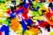 Multi Colored And Colorful Feather Background.background From Feathers Of  Birds. Bright Colored Fea poster