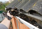 Roofer Cleaning Rain Gutter From Leaves In Spring. Roof Gutter Cleaning Tips. Clean Your Gutters Bef poster