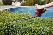 stock photo of trimmers  - The person cuts the hedge by the Hedge trimmer - JPG
