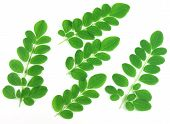 foto of oleifera  - Edible fresh moringa leaves over white background - JPG