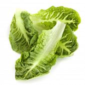 Romaine or cos lettuce leaves, isolated on white.