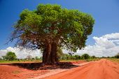 image of baobab  - Baobab tree on red soil road - JPG