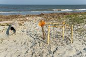 Protected Loggerhead Turtle Nest