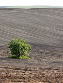 field with a tree in Southern Moravia, Czech Republic